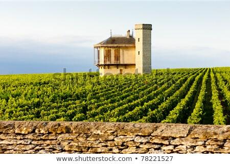 Vougeot vineyards  Stock photo © Hofmeester
