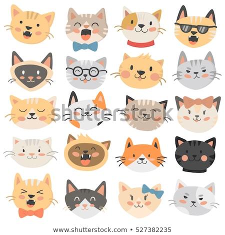 vector set of cat face Stok fotoğraf © olllikeballoon