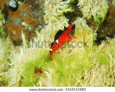 Bright orange fish with black and white markings Stock photo © lovleah
