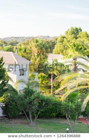 Modern Luxury Villa Resort with Greenery Palms Garden. Stock photo © ShustrikS