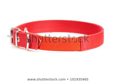 Buckles belt over white background Stock photo © RuslanOmega