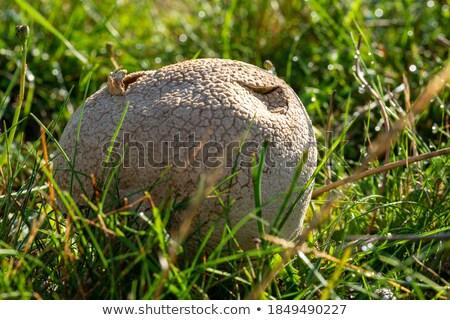 Sunlit autumn grass, closeup shot. Stock photo © pashabo