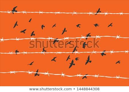 Podziale ogrodzenia drutu kolczastego dziedzinie drewna Zdjęcia stock © rhamm