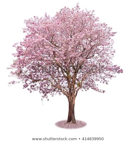 Mooie zomer bloesem boom witte roze Stockfoto © pab_map