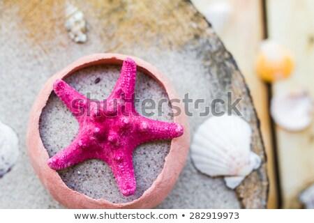 colorfull Sea shells sand board Stock photo © fotoaloja