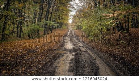 Forêt route boue arbre paysage feuille Photo stock © ankarb
