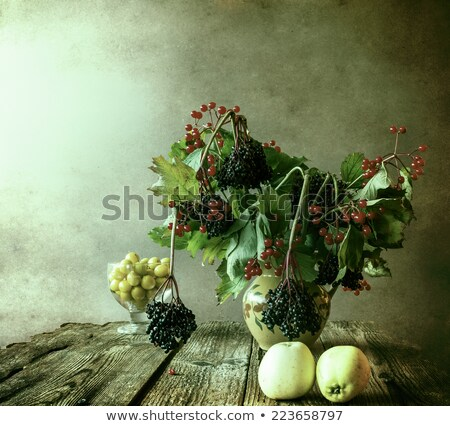 still life branches hawthorn plums stock photo © fotoaloja