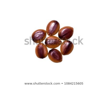 Cassia Fistula seed Stock photo © ziprashantzi