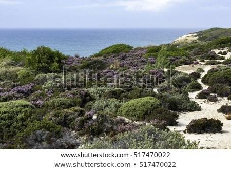 Planten Portugal kustlijn bloemen west kust Stockfoto © compuinfoto