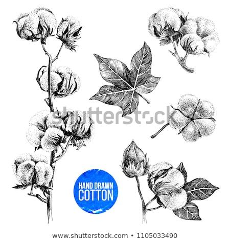 Raw Cotton Buds On Cotton Texture Stock photo © mart