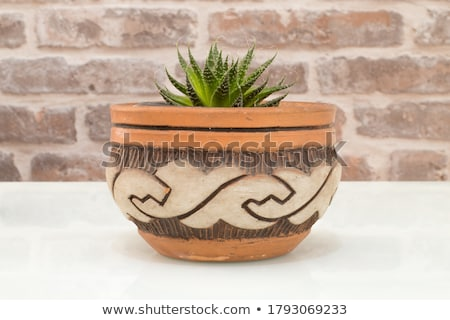 Flower pot with succulent plant on antique brick wall. Stock photo © marylooo