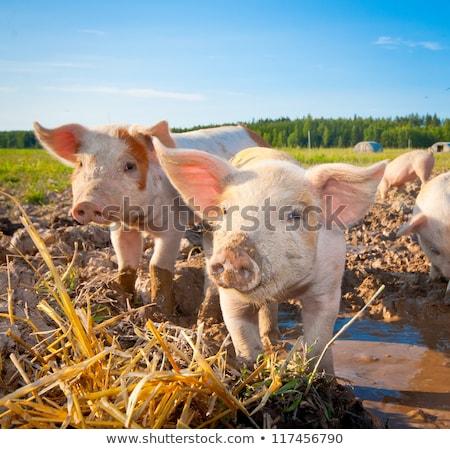 фермы сцена сельскохозяйственных животных иллюстрация здании природы Сток-фото © bluering