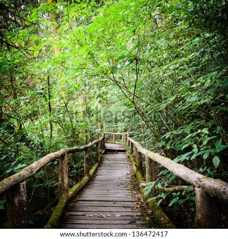木製 森林 ツリー 草 道路 自然 ストックフォト © Ansonstock