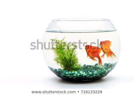 the water tank on a white background Stock photo © njaj