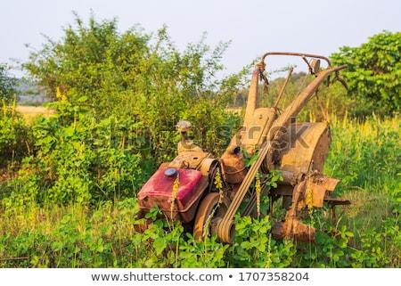 Campo de arroz paisaje verde montanas arroz turismo Foto stock © motttive