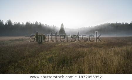 mooring stock photo © rikke