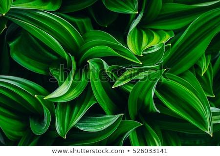 Fresh green plant Stock photo © Anna_Om