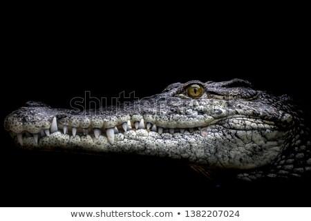 portré · krokodil · szem · száj · fej · park - stock fotó © fouroaks