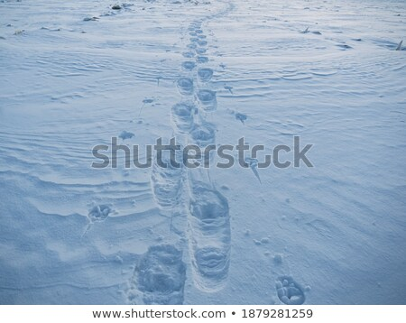 Skiing person imprint in winter snow Stock photo © stevanovicigor