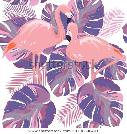 バイオレット 鳥 羽毛 自然 ペン ストックフォト © gladiolus