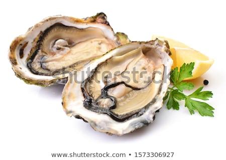 Osztriga fehér illusztráció étel művészet grafikus Stock fotó © bluering