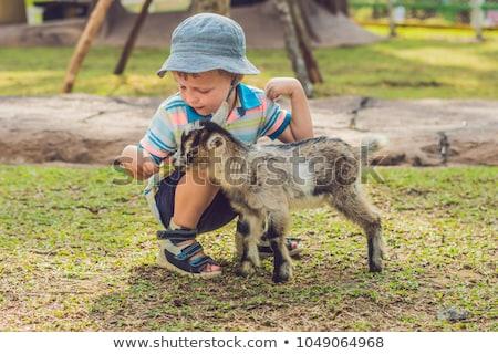 small cute boy is feeding a small newborn goat stock photo © galitskaya