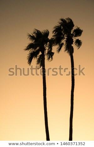 Coconut palm trees tropical typical background Stock photo © lunamarina