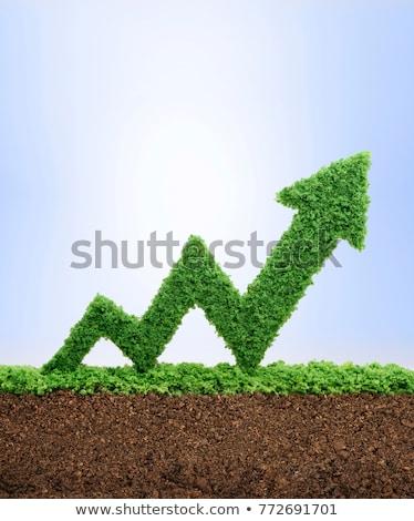 Zielona trawa słowo odizolowany biały grafika komputerowa zielone Zdjęcia stock © RAStudio