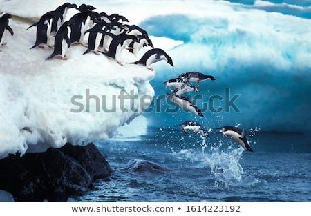Penguen örnek tüy hayvan kanatlar poster Stok fotoğraf © colematt