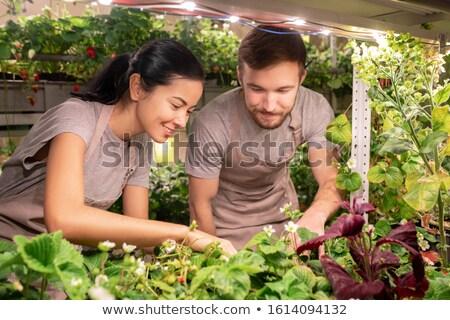 Jonge broeikas werknemers boeren werkkleding Stockfoto © pressmaster