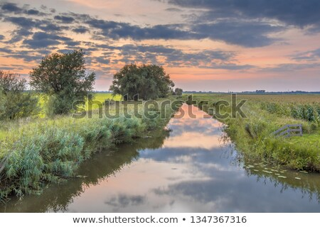 typical dutch ditch with willows stock photo © ivonnewierink