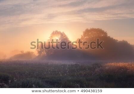 tölgy · reggel · köd · égbolt · fa · tavasz - stock fotó © vavlt