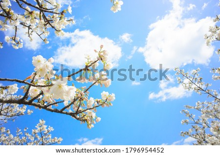 white flower on sky background Stock photo © taden