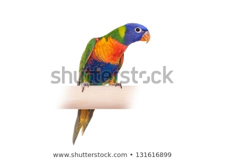 Colorful feather over white background Stock photo © tetkoren