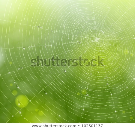 spider in green nature background stock photo © sweetcrisis