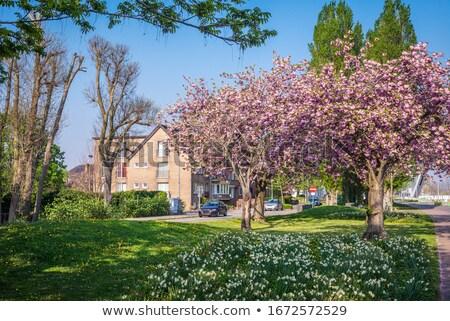 Fleurs pelouse tulipe fleur vieille ville printemps Photo stock © MichaelVorobiev