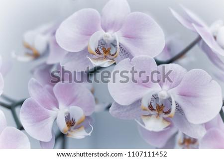 pembe · orkide · şube · sınır · yalıtılmış · beyaz - stok fotoğraf © neirfy