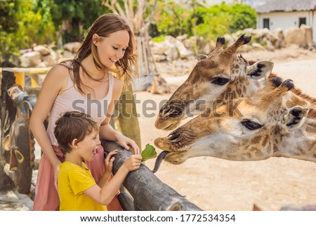 happy young woman watching and feeding giraffe in zoo happy young woman having fun with animals saf stock photo © galitskaya