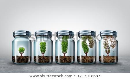 Növekedés üzlet gazdasági pszichológia szimbólum növekvő Stock fotó © Lightsource