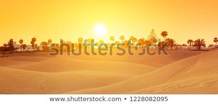 Sand dunes gran canaria Stock photo © Hofmeester