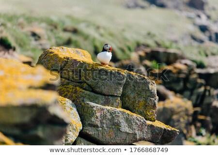 сидят · утес · океана · трава · синий - Сток-фото © wildnerdpix