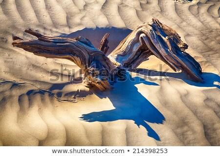 Morte vale madeira hdr Califórnia pôr do sol Foto stock © weltreisendertj