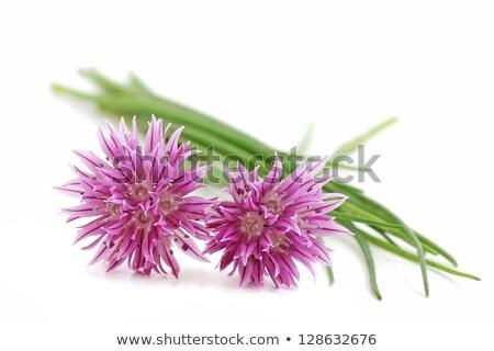 Friss snidling virág rusztikus tavasz nyár Stock fotó © mythja