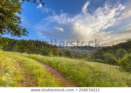 scene in the German hills of the Eifel area Stock photo © meinzahn