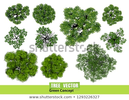 An aerial view of a tree Stock photo © bluering