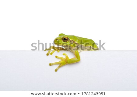 frog on white background stock photo © istanbul2009