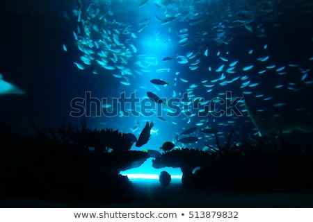 A fish in deep water Stock photo © bluering