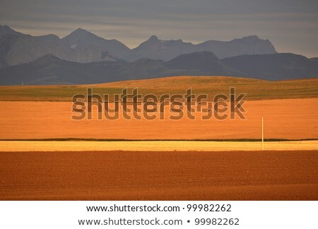 High Plains of Alberta with Rocky Mountains in distance Stock photo © pictureguy