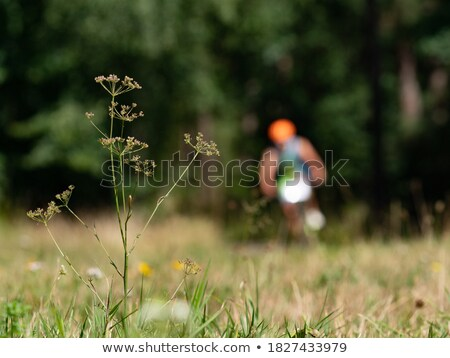 man & woman playing with grass stalk Stock photo © IS2