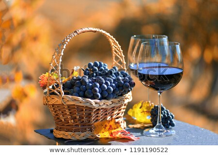 fall scene with glasses of red wine and grapes stock photo © sandralise